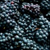 Oregon Pinot Noir: When was the last time a wine made you think?